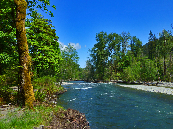 The Elwha River - its dam removal project is the 2nd largest restoration effort ever in NPS history